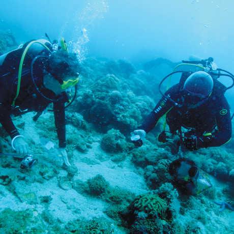 Meg Burke collecting dive