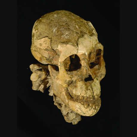 """""""Selam"""" skull"""