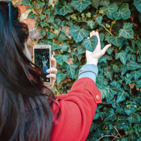 Woman taking photo of ivy for iNaturalist