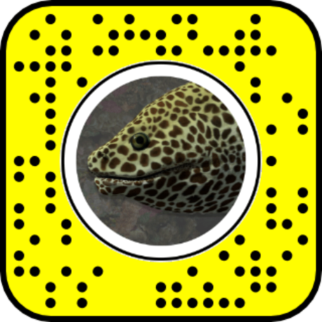 Snapcode for Laced Moray Eel AR lens