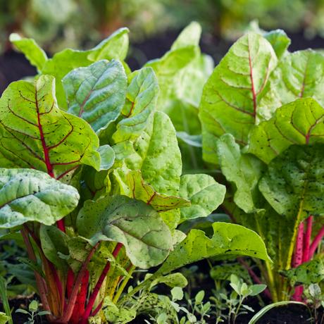 Fresh, locally sourced produce