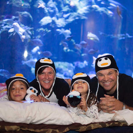 A family at a Penguins+Pajamas sleepover in front of a giant aquarium exhibit