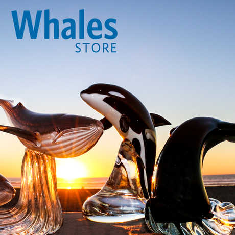 Banner for Whales online store