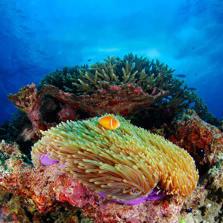 A stunning coral reef in blue ocean waters