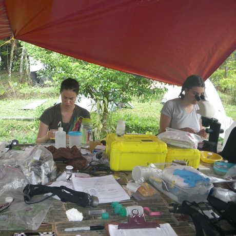 Hannah, Vanessa and Natalia are preparing collected specimens.