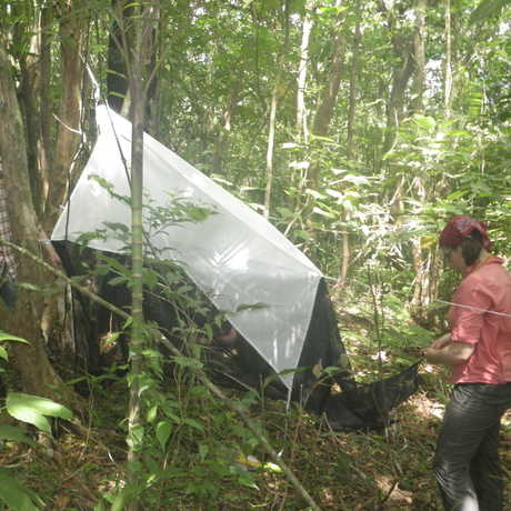 Academy scientists setting up a flight trap in the forest.