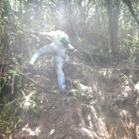 A scientist uses roots and trees to climb to Mt. Banahaws summit