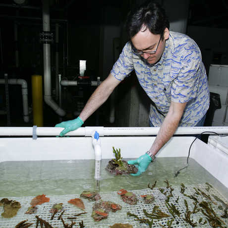 Bart Shepherd working with corals.