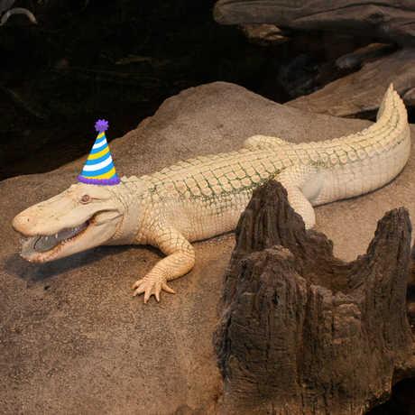 claude birthday