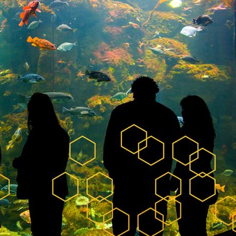 Hive banner image