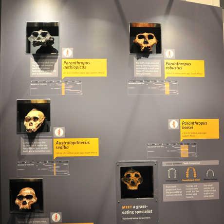 Human Odyssey panel