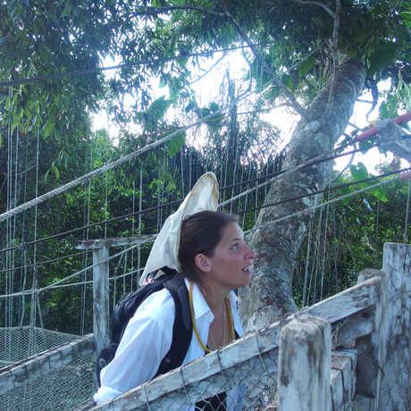 Entomology curator Michelle Troutwein hunts flies in canopy of the Peruvian Amazon.