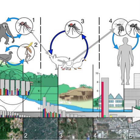 Biodiversity Gradient and Health graphic