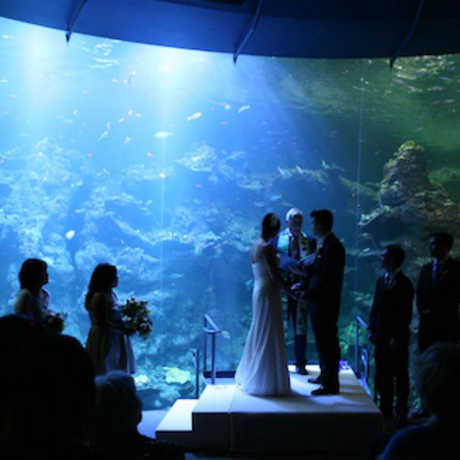 Photo of wedding ceremony in front of the Philippine Coral Reef exhibit: © Orange Photography