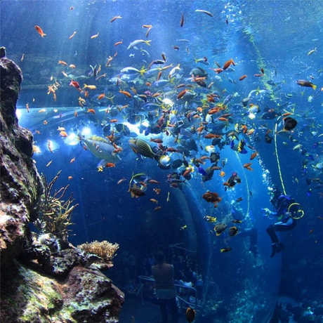 View of a diver inside a school of colorful fish