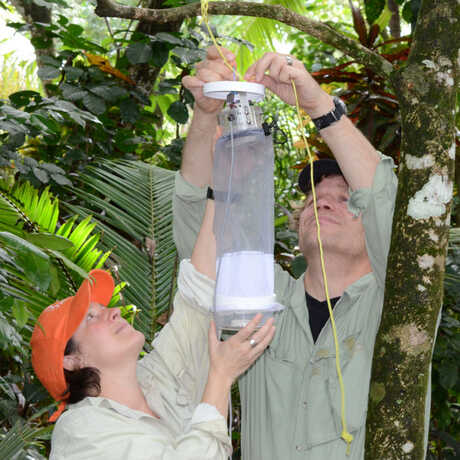 Shannon Bennett and Durrell hang an insect trap while on expedition