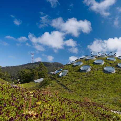 The Living Roof of the Academy of Sciences, by Tim Griffith