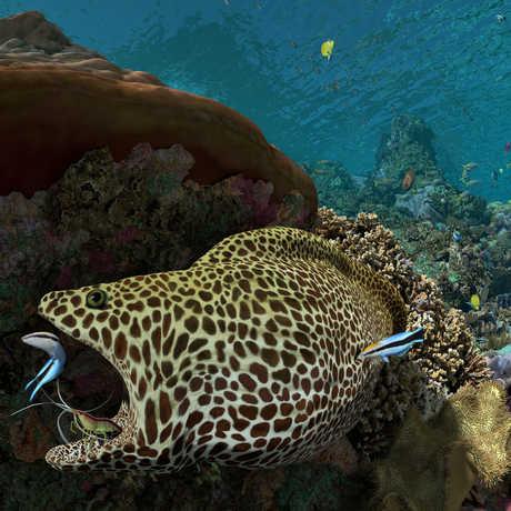 Expedition Reef planetarium show