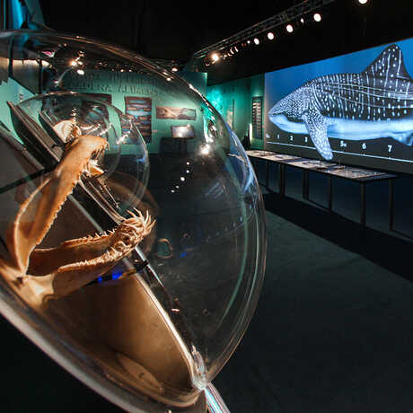 Sharks exhibit opens at California Academy of Sciences