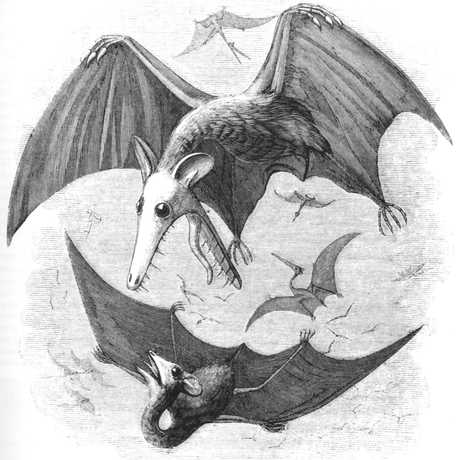 Inaccurate portrayal of a pterodactyl looking like a bat by Edward Newman (1801-1876)