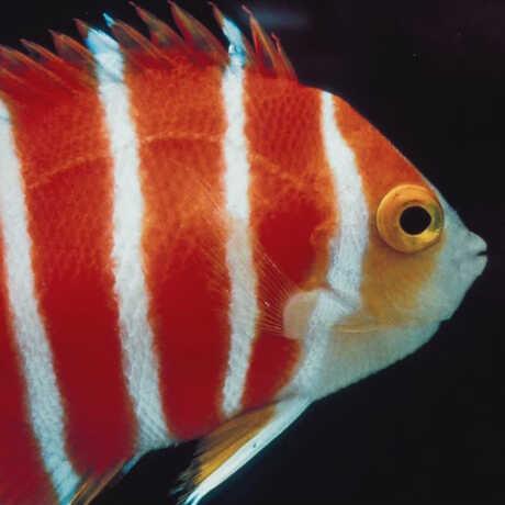 Photo of fish in twilight zone