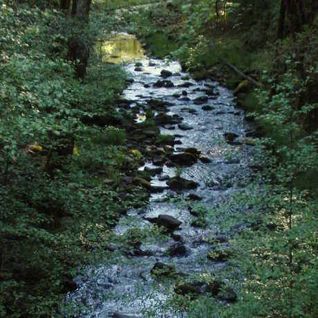 Angelo Coast Range Reserve