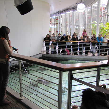 Presenter and biologist over the lagoon exhibit