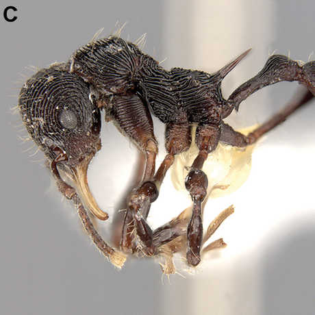 Photo of ants of different sizes