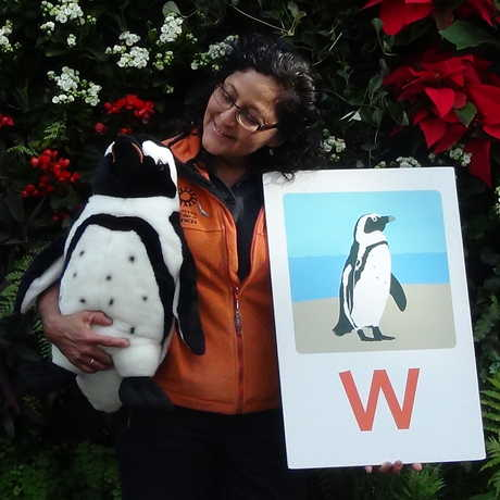"A presenter holding props from ""P"" is for Penguin"