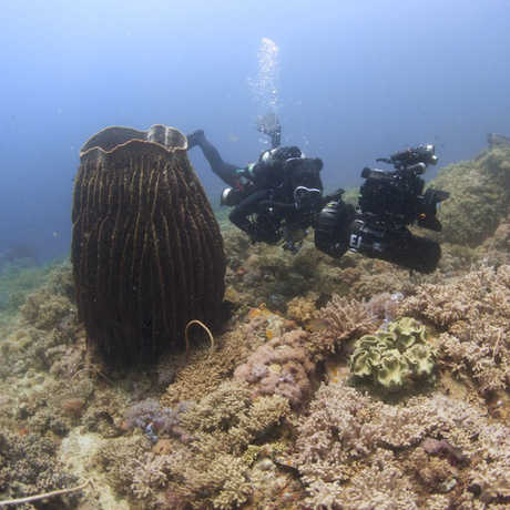 Underwater photo from the 2014 Philippine Biodiversity Expedition