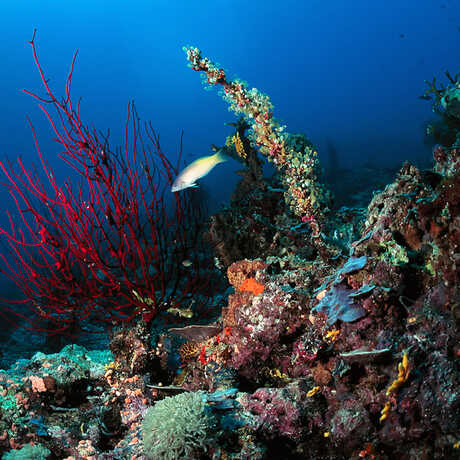 Coral reef, Papua New Guinea, Anderson Smith2010/Flickr