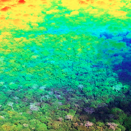 Carnegie Airborne Observatory: Turning forests into 3D images