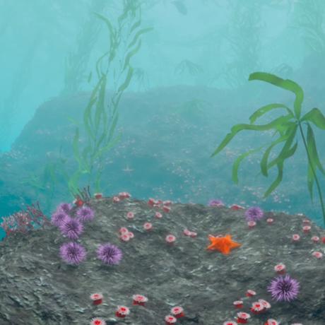 Kelp scene from Habitat Earth