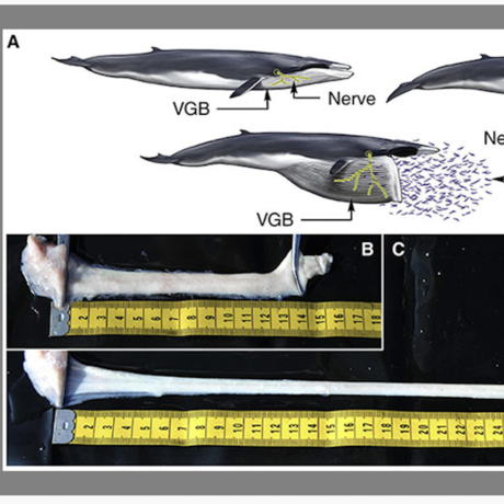 Nervy whales