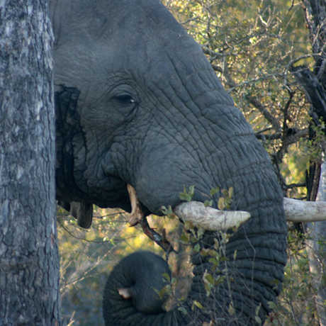 elephant, Anthony Barnosky