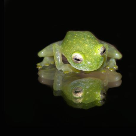 Frog, Calphoto