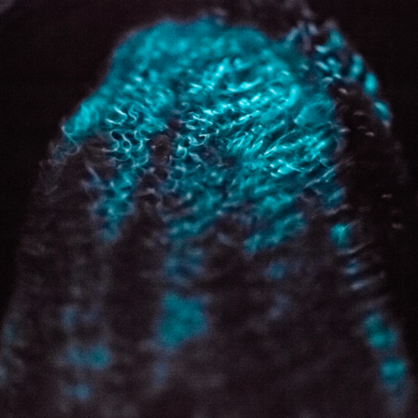Bioluminescent ctenophore, Stuart Thomson