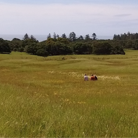 People sitting in a meadow
