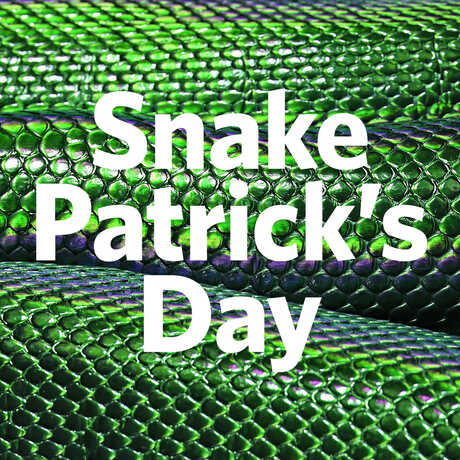 The words Snake Patricks Day on a background of green snakeskin