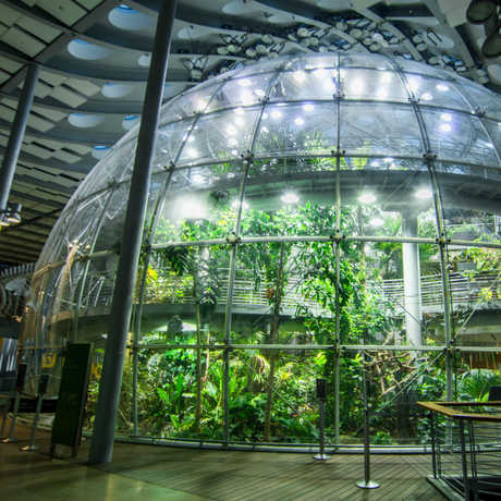 Rainforest dome
