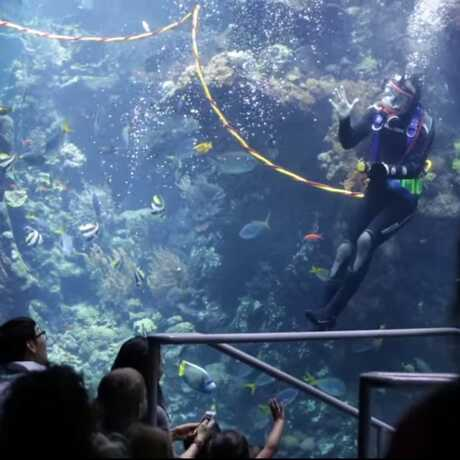 Volunteer diver in Philippine Coral Reef exhibit