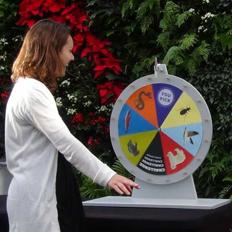 Contestant spinning the game wheel