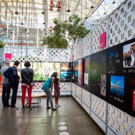 Museum visitors explore BigPicture exhibit