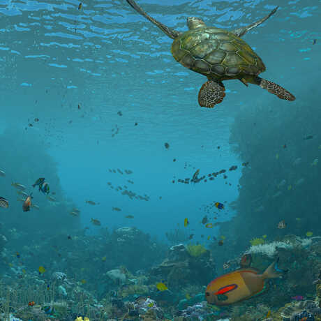 A digital still from Expedition Reef shows a sea turtle swimming between giant, colorful coral colonies