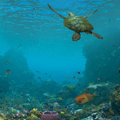 expedition reef morrison planetarium design nightlife calacademy