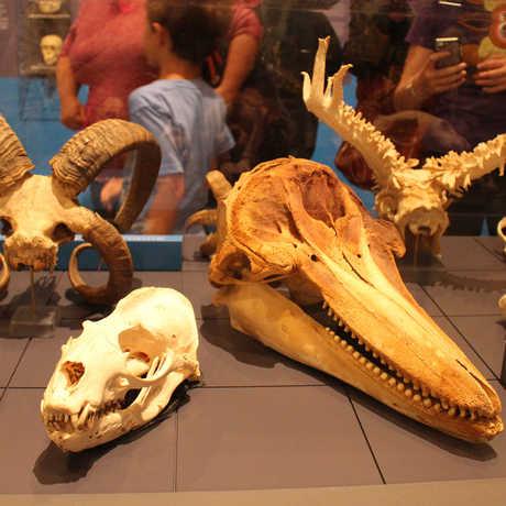 Bizarre skulls