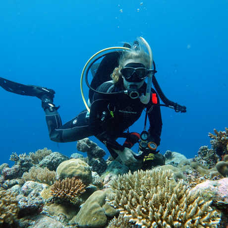 Academy scientists Dr. Rebecca Albright underwater exploring a coral reef