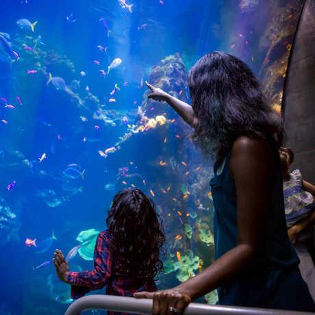 Visitors at coral reef tank