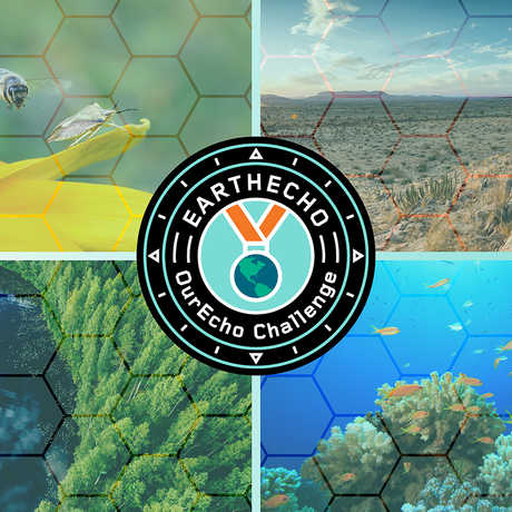 Four ecosystems for OurEco Challenge