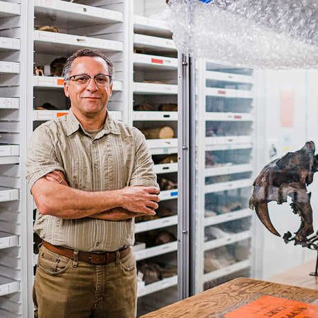Dr. Peter Roopnarine stands in the Academy collections next to fossil of saber-toothed cat